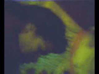 Zorrica monica tello prepa rio verde slp βίντεο