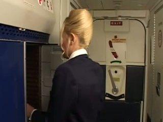 jednolity, stewardess